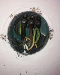נמלים ניגשות לג_ל לנמלים